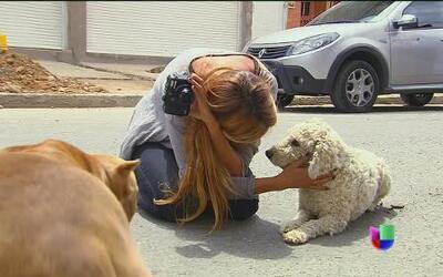 Al rescate de perros: Un amor incondicional