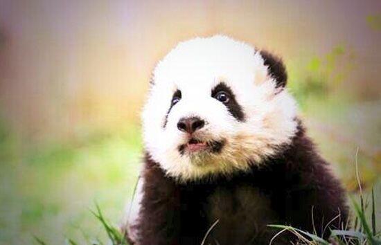 el Zoológico anunció que el nombre elegido es Bao Bao, que en mandarín s...