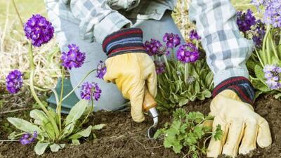 La mala hierba, o maleza, suele aparecer hasta en los jardines más cuida...