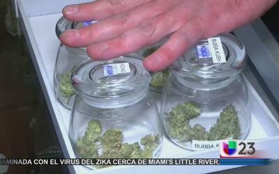 Florida votará por el uso de marihuana con fines medicinales