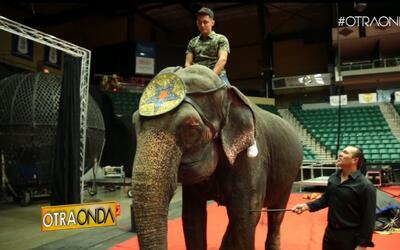 Otra Onda Xtra: El Circo Hella Shrine Llega a Dallas