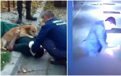Dos imágenes que contrastan el trato que reciben las mascotas