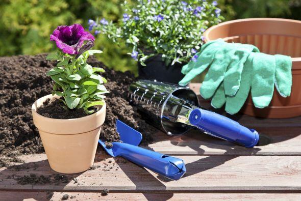Utiliza alguno de estos 10 tipos de flores que puedes plantar en tu jard...
