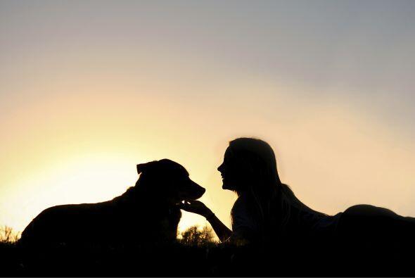 Un perro equilibrado es lo mejor para tener en tu hogar y si tu amigo ne...