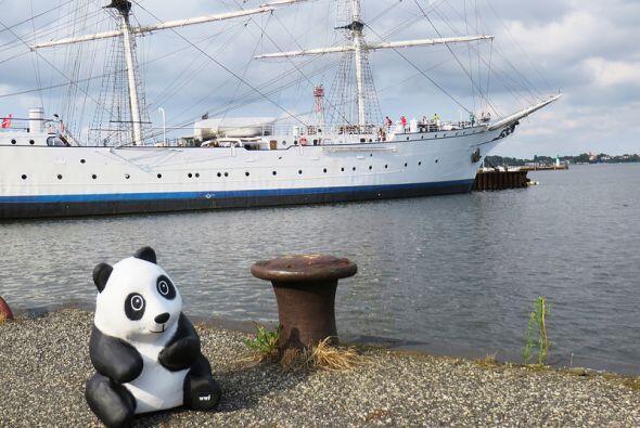 Los pandas ya han visitado otras ciudades de Alemania como Straslund. (F...