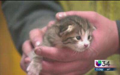 Asombroso rescate de gatito en California