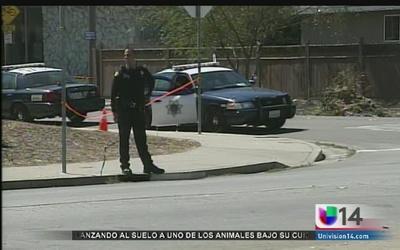 Mujer muere atropellada en East San José