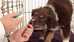 entrena a tu mascota con un clicker