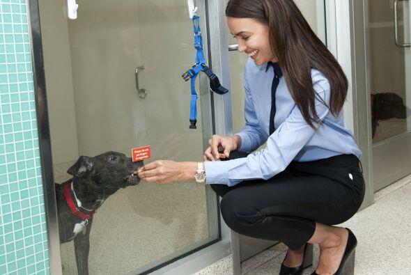 ¡Irina Shayk es una ferviente amante de lo animales y no se cansa...