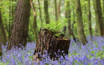 Vea los beneficios que trae para una muejr el vivir cerca de un bosque