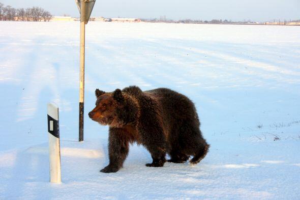 Este momento fue captado por Sergey Poluyan, quien iba viajando en su au...