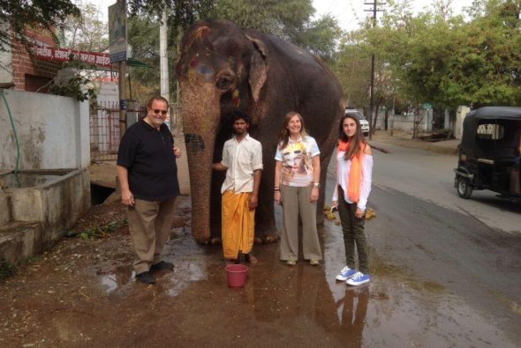 Desde luego, la familia no podía dejar fuera la fotografía con un elefan...