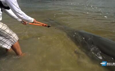Prehistórico pez sierra es atrapado en las playas de Florida