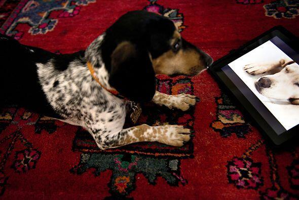 Dog TV,  es el primer canal de televisión para perros y sus cread...