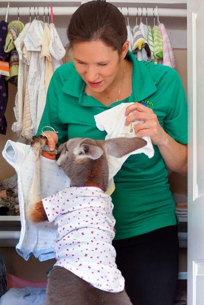 El canguro es amante de la moda y tiene un guardarropa especial en donde...