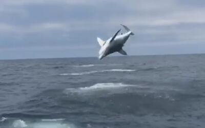 Estos pescadores lanzaron la caña y encontraron un tiburón