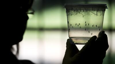 salud zika mosquito