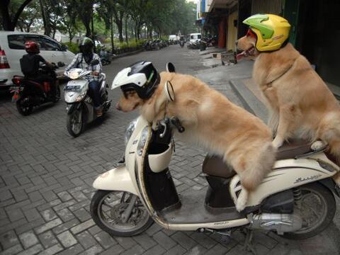 Ace y Armani esperan su turno para montarse en la motocicleta.