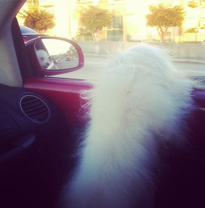 Vanessa De Roide también tiene una perra llamada Sophie.