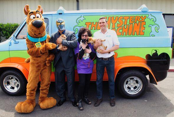 Mira más fotos del evento.  Conoce también a estos perros...