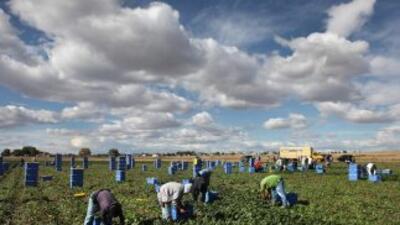 Trabajadores agrícolas inmigrantes.