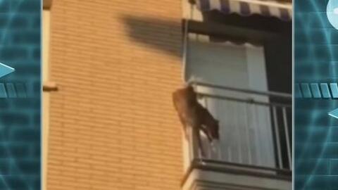 Maltrato lleva a un perro a saltar al vacío