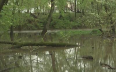 Alerta en Albany Park por riesgo de inundaciones