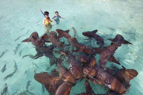 No se pierdan la experiencia de hacer snorkel junto a los inofensivos ti...