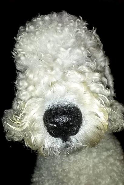 Este adorable perrito sólo tuvo un gran susto, ¡y aprendió a no persegui...