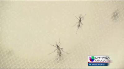 Primer caso de Zika en Chicago