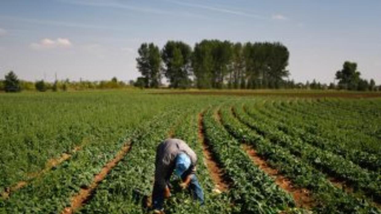 La ley migratoria HB56 de Alabama provocó el éxodo de miles de trabajado...