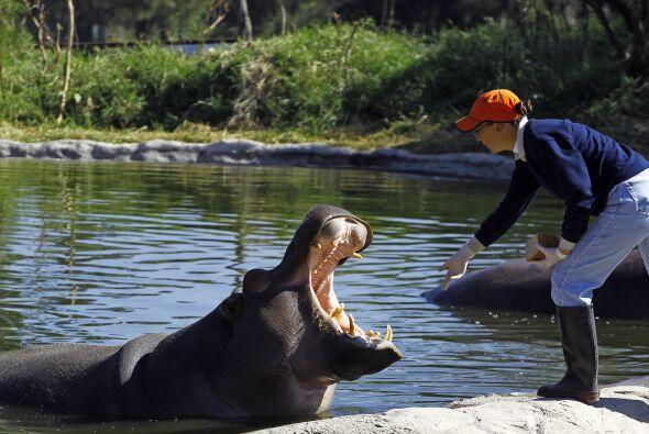 De acuerdo con el parque ecológico Zoo Guadalajara, en donde naci...