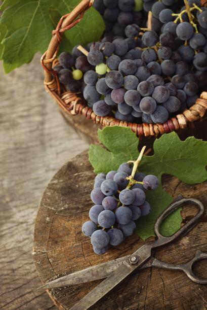 Uvas negras dispuestas elegantemente en una bandeja y adornadas con una...