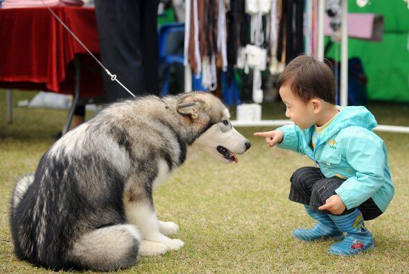 Mediante la incorporación de animales domésticos en las ac...
