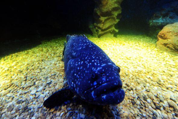 Sea Life, Turquía. Uno de los acuarios más modernos se encuentra en un l...