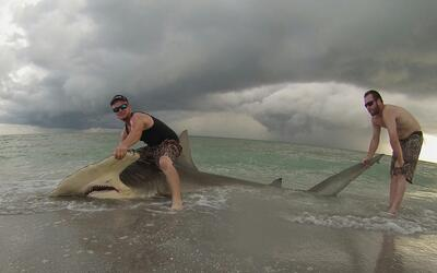 Los pescadores se tomaron fotos y video antes de liberar al tiburón.