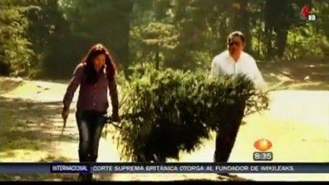 Si de verdad quieres ayudar al medio ambiente, debes optar por un árbol...