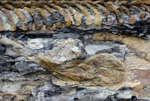 La especialista subrayó la importancia de este hallazgo para la paleonto...