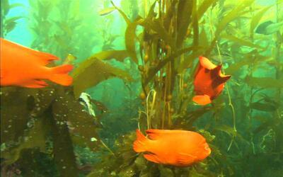 El archipiélago del Norte o Channel Islands, un paraíso de diversidad na...