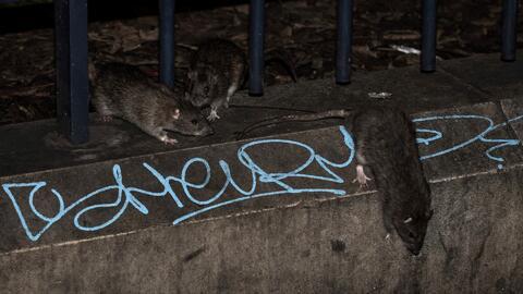 Buscan una solución definitiva en el edificio de El Bronx donde murió un...
