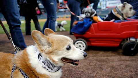Los fans de los White Sox llevaron a sus perros al estadio