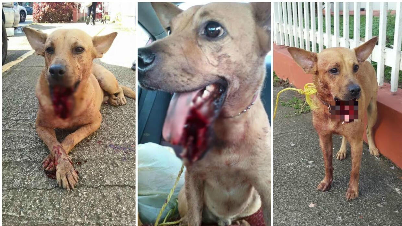 Rescatan perro Bengie