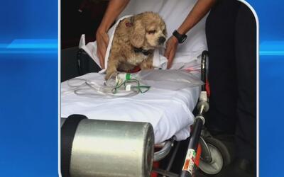 Un perro ciego fue rescatado por un hombre a bordo de una embarcación en...