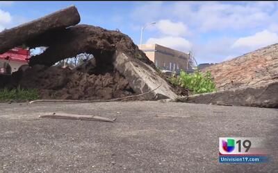 Caída de árboles en el norte de California causa daños a propiedades