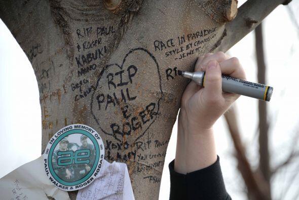 Algunos hasta dejaron mensajes en el árbol en el cual chocó el carro de...