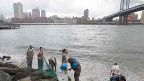 Estudiantes durante el BioBlitz en el Parque del Puente de Brooklyn.