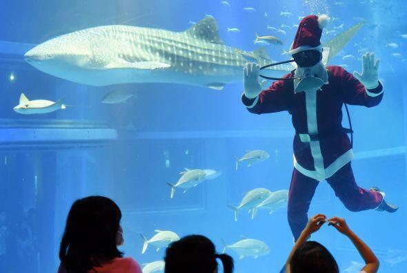 Santa estará en el acuario hasta la  noche buena, para que después pueda...