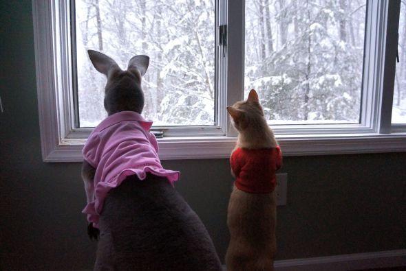 Larry fue adoptado para hacerle compañía a Bomaroo, ya que los canguros...