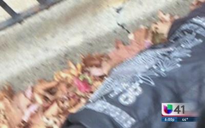 Investigan muerte de joven hispano en el Bronx