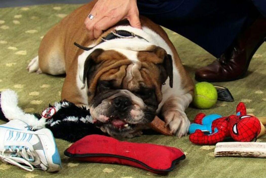 App para mascotas perdidas. Esta herramienta permite darle seguimiento a...